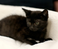 cats #2