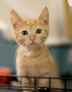 cats #3