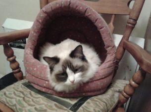 Emmy-Lou In Her New Bed